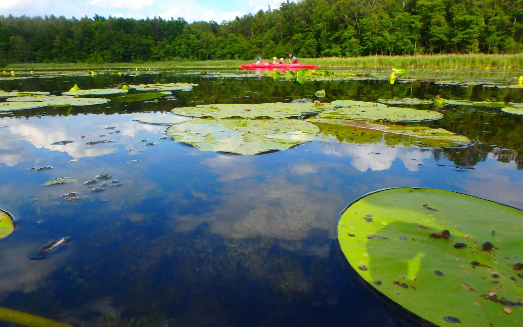 Super CAMP – Mazury, LATO 2020 obóz j. angielskiego